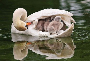 Birds taking care of their babies
