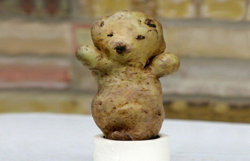 Funny Fruits And Veggies Bear Potato
