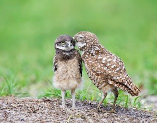 Owl Photography By Judylynn Malloch