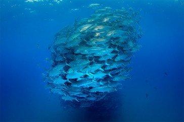 underwater spirals 5