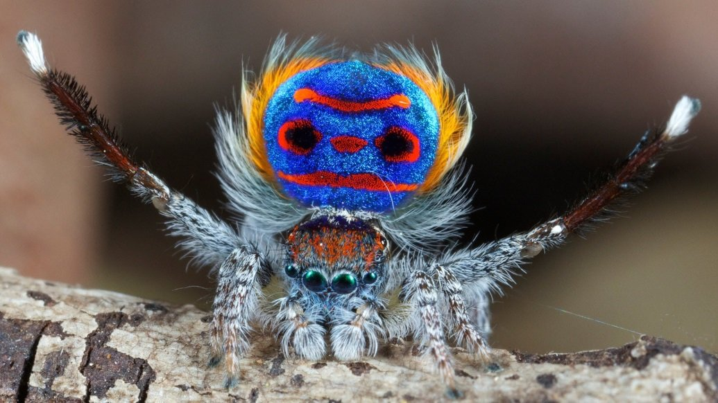 cute spiders
