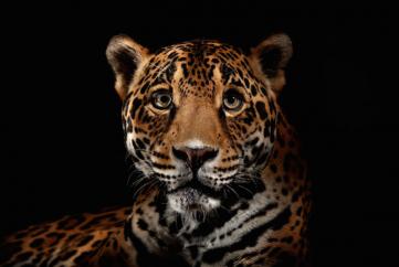 beautiful cats leopard