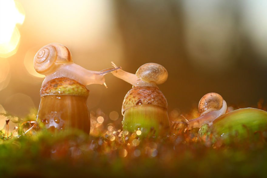 Magical Macro World Of Snails And Bugs