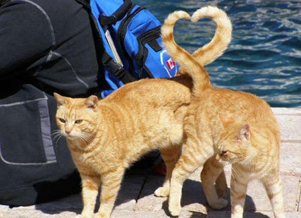 Perfectly Timed Cat Photos 1