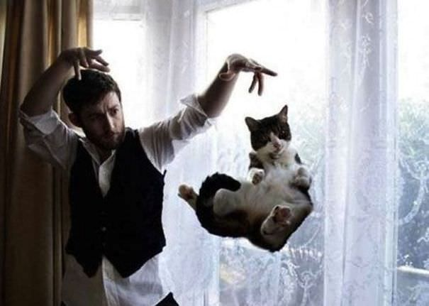 Perfectly Timed Cat Photos 10