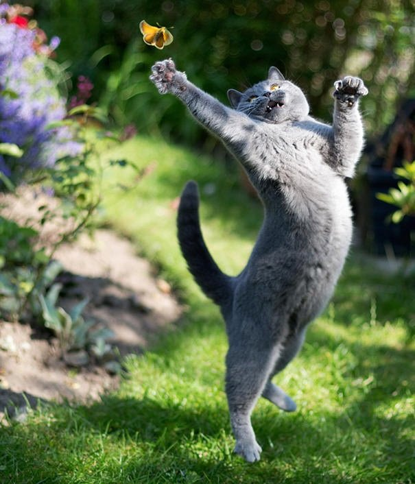 Perfectly Timed Cat Photos 51