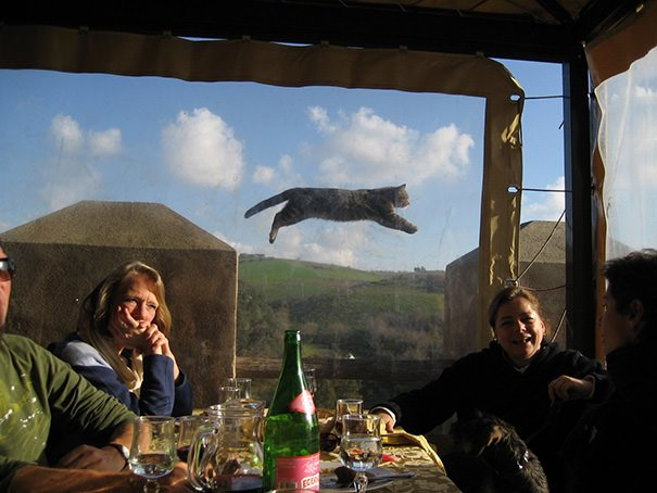 Perfectly Timed Cat Photos 6