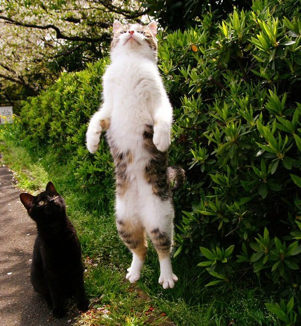 Perfectly Timed Cat Photos 82