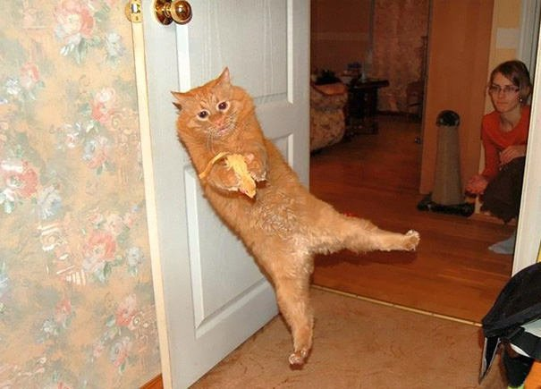 Perfectly Timed Cat Photos 9