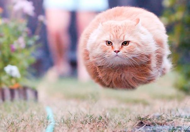 Perfectly Timed Cat Photos 7