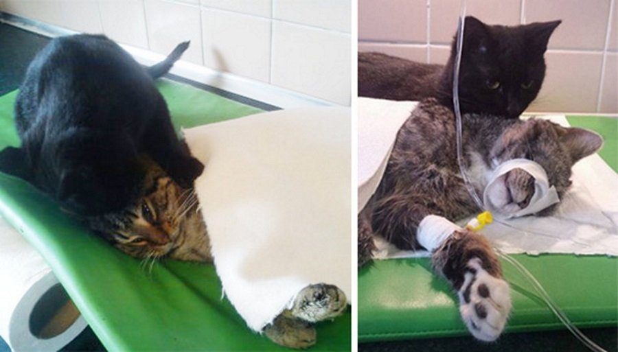 Nursing Cat Looks After Other Animals At Animal Shelter