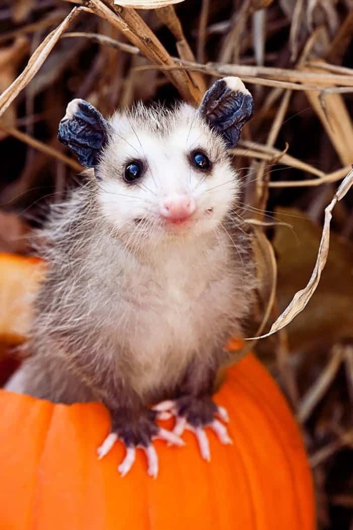 Cute Baby Possum