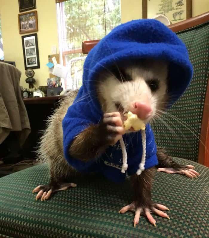 Petunia rocks in her hoodie