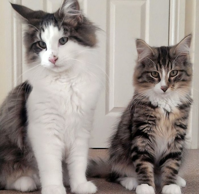 This is Clive (right) together with his brother, right before he went missing