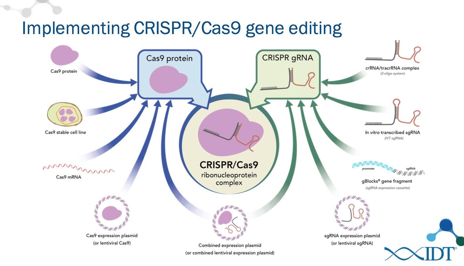 Human Gene Editing Is Leaving Ethics Dangerously Far Behind