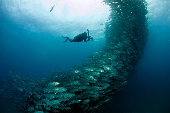 Fish Create Huge Underwater Spirals