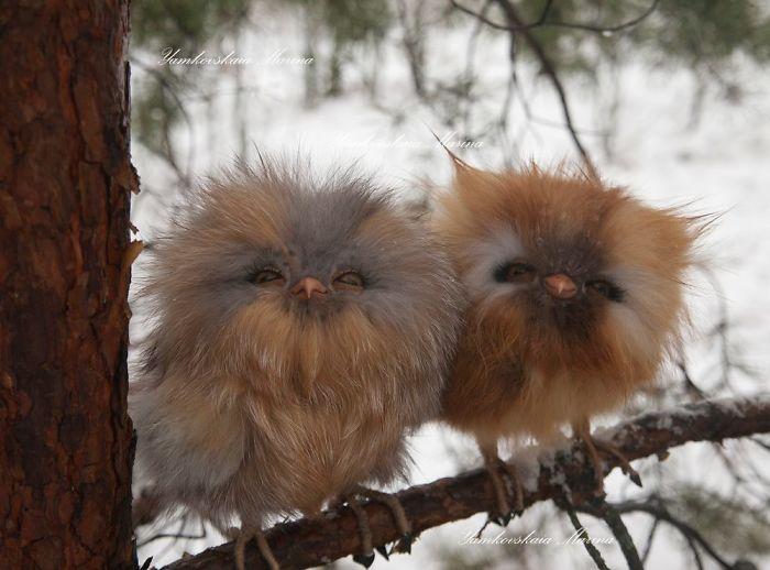 cute owls 1