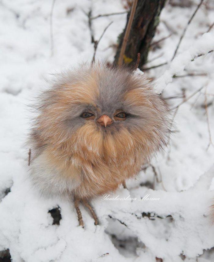 cute owls 6
