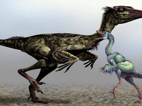 Stenonychosaurus