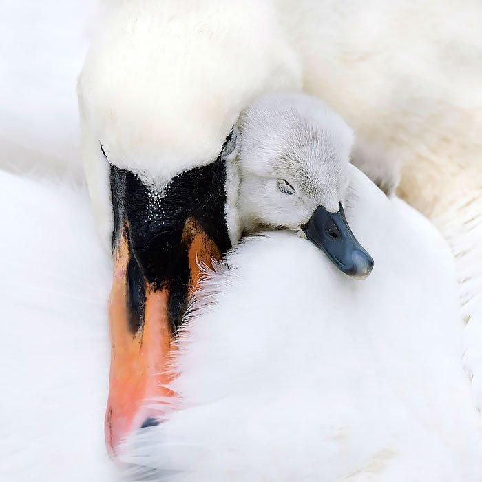 birds ttaking care 2
