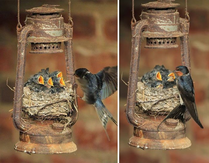birds ttaking care 4