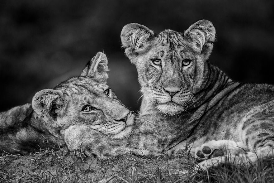 Category Black And White Highly Commended 'Brothers' By Luke Massey (Es)