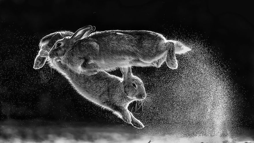 Overall Winner And Black And White Category Winner 'Jump' By Csaba Daroczi (Hungary)
