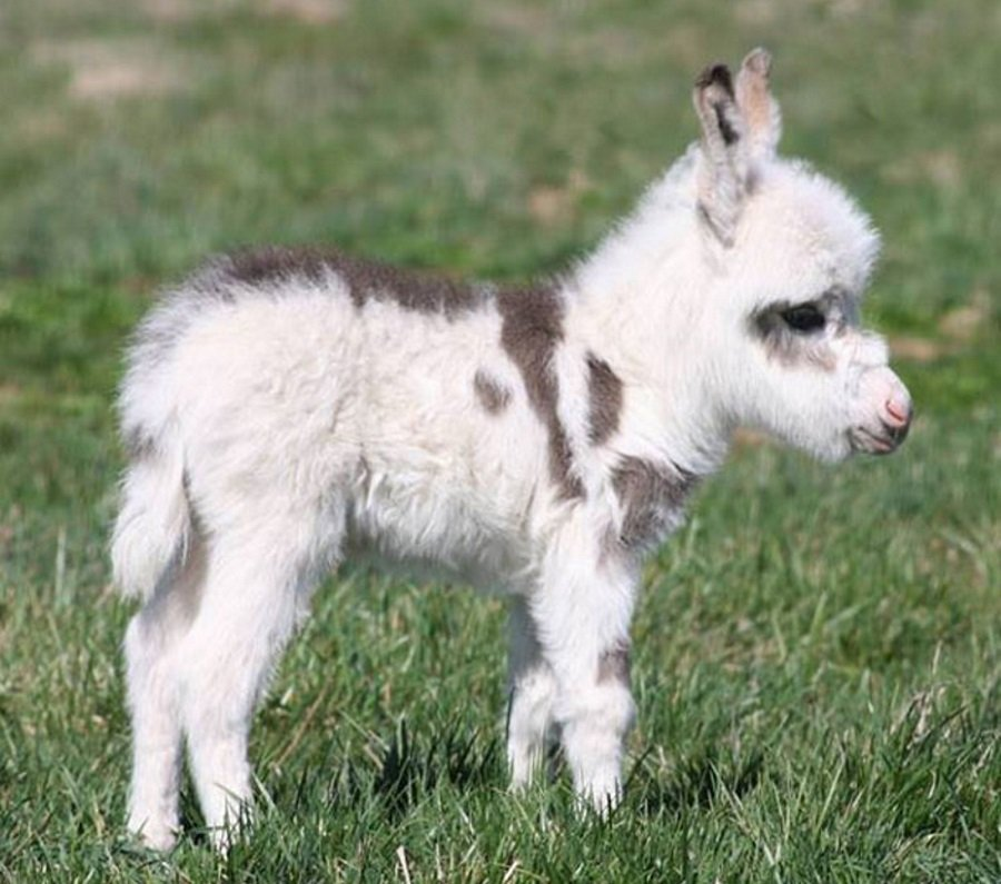 cuteness overload animals Baby Donkey