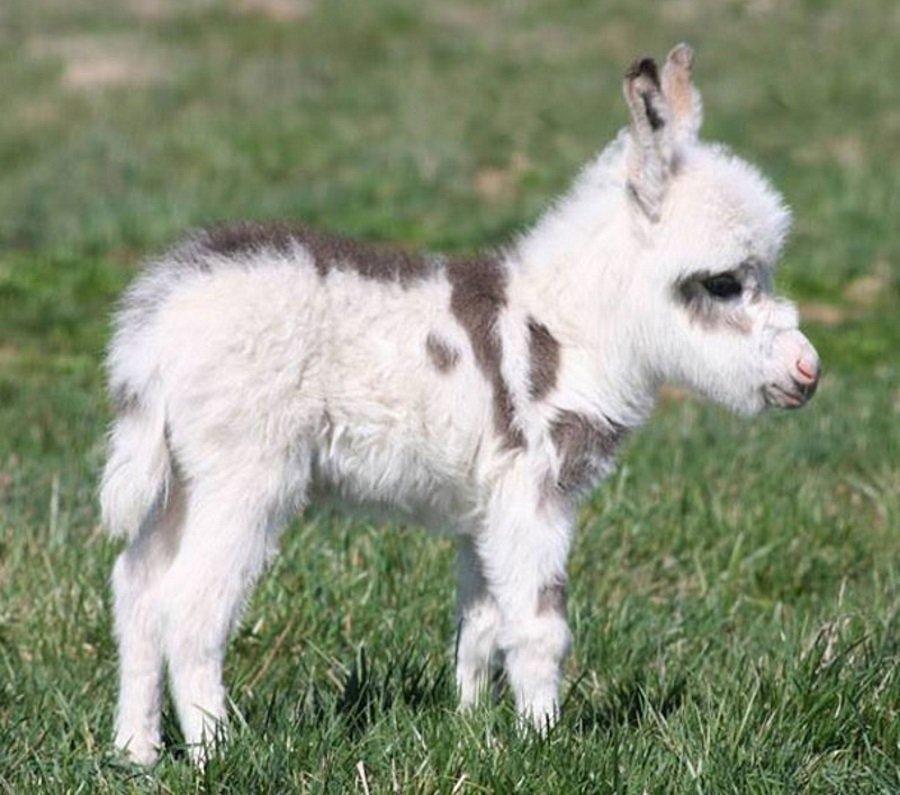 cuteness overload animals Baby Donkey
