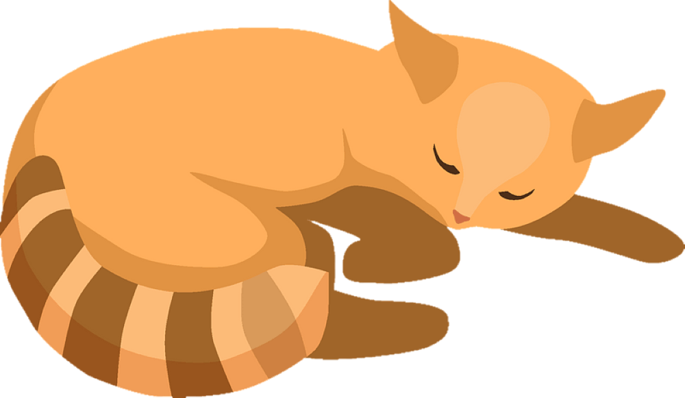 cat sleep